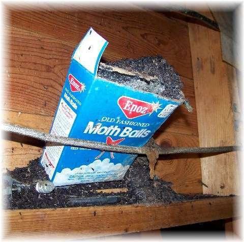 Will mothballs get rid of rats