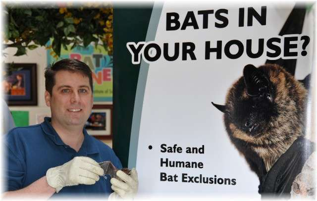 Bats in your house