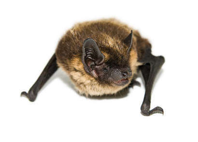 how to get rid of bats outside your home
